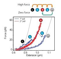 biophysics sander tans angewandte chemie