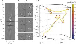 biophysics systems biology 3D tracking technique taute shimizu tans