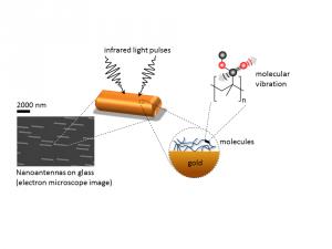 biomolecular photonics yves rezus nanoantennas